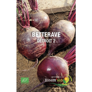 Betterave Détroit 2 Bio